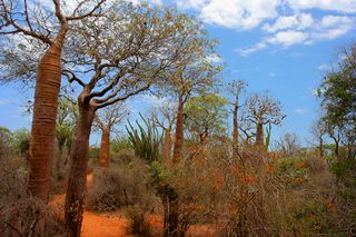 "Picture of a spiny forest in Madagascar, with permission ""all CC-BY-SA"""